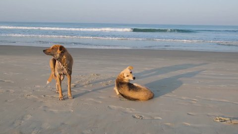 Street dogs on the beach in South Goa.India