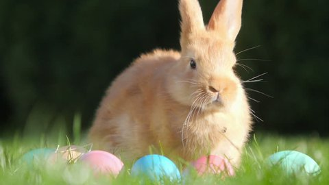cute little rabbit sitting on the grass near the Easter eggs, festive symbol