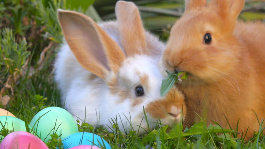 two cute little bunnies sit on the grass near Easter eggs, a festive symbol