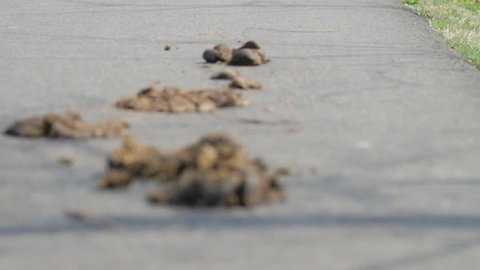Horse droppings on road.mov