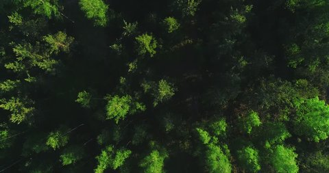 Aerial, reverse, birdseye, drone shot, above colorful Scandinavian spring forest, finnish woodlands and green gold trees, on a sunny, summer evening, in Finland, Scandinavia