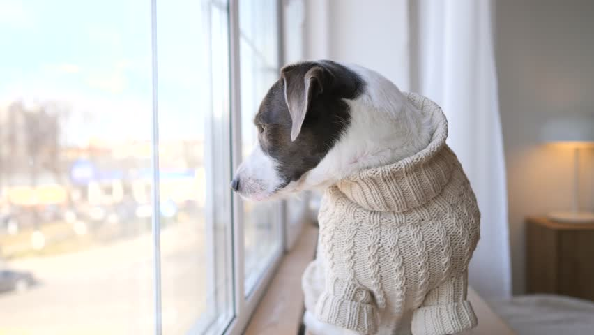 Dog Looking At Window Waiting For The Arrival Of Owners