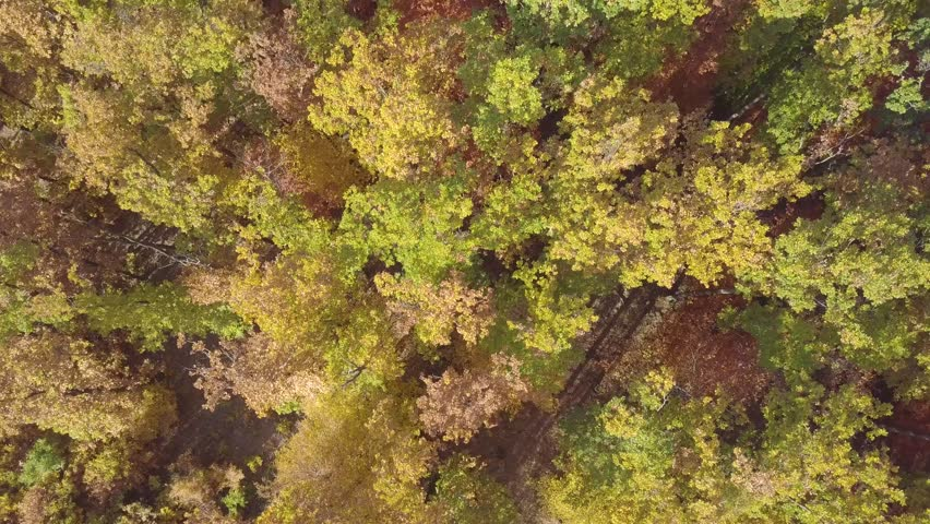 Over the forest in autumn | Shutterstock HD Video #1027990793