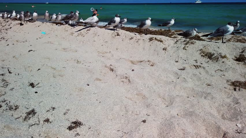 A flock of seagulls squawking on a sandy beach, as the waves wash up on the shore.