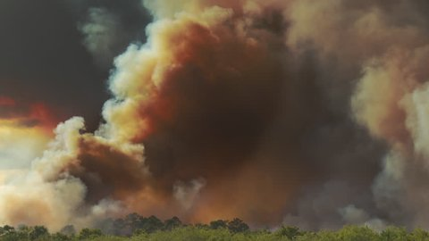 Thick plumes of dark SMOKE rise from a Amazon rain forest in Brazil that is on fire and burning due to deforestation. Dark yellow, black, and gray smoke billows into the sky.