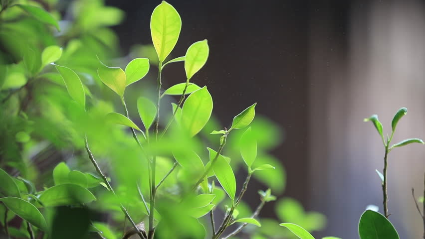 Green leaf and water spray | Shutterstock HD Video #1028205413