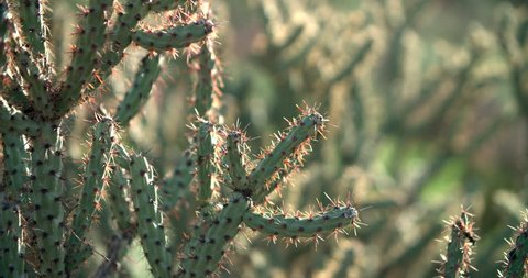 Close up of a cactus in the Superstition Wilderness near Phoenix, Arizona.