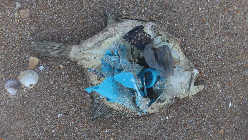 Dead dry fish on a seashell beach in Black sea. Sea pollution toxic plastic garbage