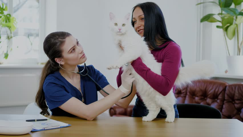 Veterinary surgeon and cat owner at vet clinic | Shutterstock HD Video #1028373173