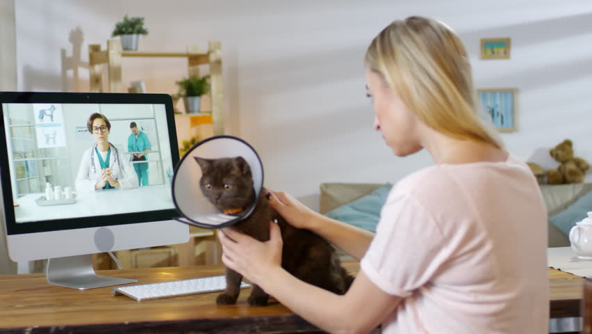 Medium shot of worried woman calming cute cat wearing e-collar and having consultation with online vet via video call. She is nodding and listening to her advice | Shutterstock HD Video #1028430953