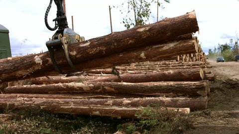 Logging truck is unloaded after arrival to saw mill. Wheel loader in action. Forestry machine loading log truck. Log truck working. Log loader machine carrying pile of wood timber
