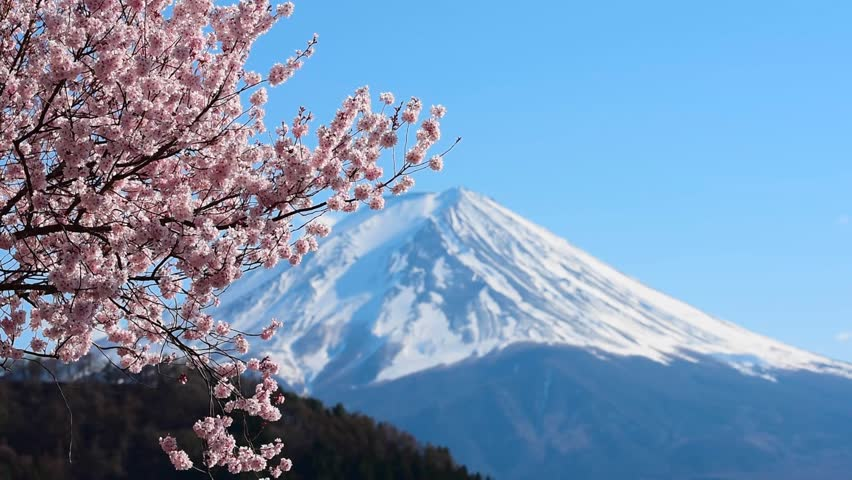 Mount Fuji and cherry blossoms which are viewed from lake Kawaguchiko, Yamanashi, Japan | Shutterstock HD Video #1028714693