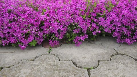 pink flowers on the wall.