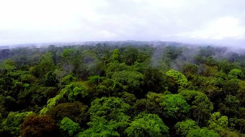 Jungles of Africa. The camera flying over the rain-forest. Beautiful landscape. The evaporation of moisture in the rain-forest of Africa. Shooting from the air over the tropics. Equatorial Guinea.
