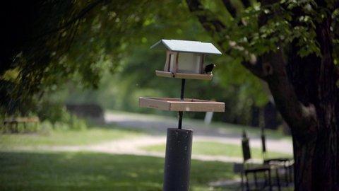 Small Birds on Park Feeder on a Sunny Spring Day