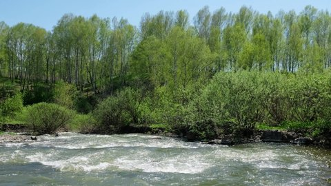 Willow bushes and birch trees on the banks of river Vydriha near village Belovo in Novosibirsk region, Siberia, Russia