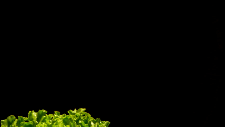 Water drops fly in slow motion over a bunch of wet green lettuce. Hand flaps a bunch of wet green lettuce on a black background   Shutterstock HD Video #1030106933
