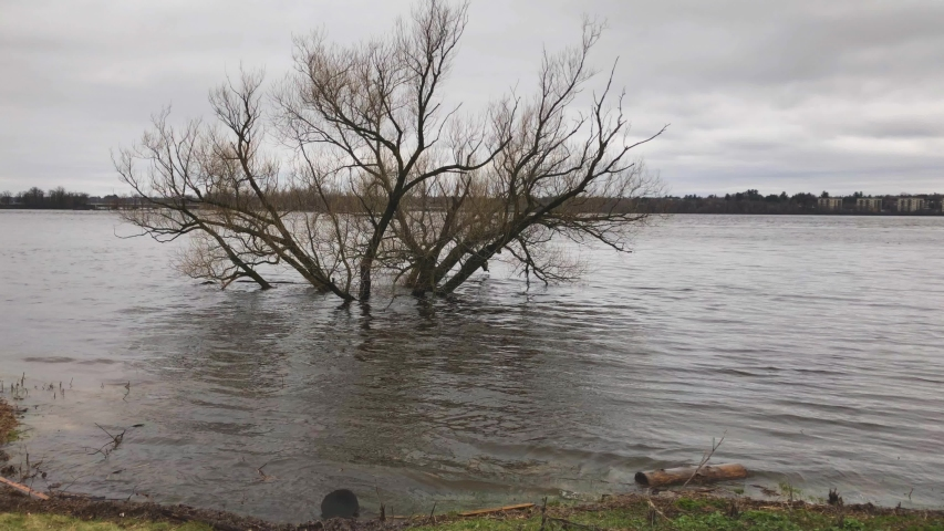 A tree submerged in water in off the Ottawa River during the 2019 Ottawa Flood. | Shutterstock HD Video #1030146743