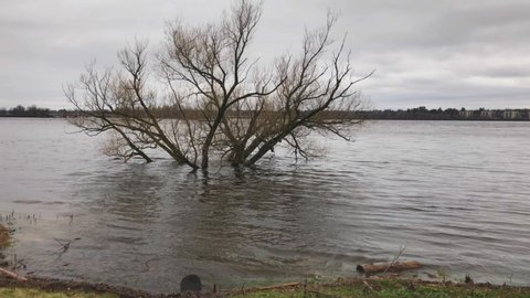 A tree submerged in water in off the Ottawa River during the 2019 Ottawa Flood.