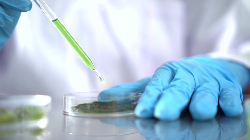 Scientists are working on research on algae and bioenergy. In the energy laboratory | Shutterstock HD Video #1030168973