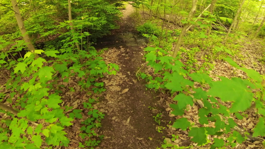 A walk through the woods, stopping to view a stream on the forest floor | Shutterstock HD Video #1030312133