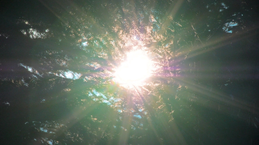 Beautiful meditative relaxing deep green forest sunshine trees low angle dolly nature sunny summer sun rays shimmer. The sun shines through the green leaves of a tree | Shutterstock HD Video #1030422473