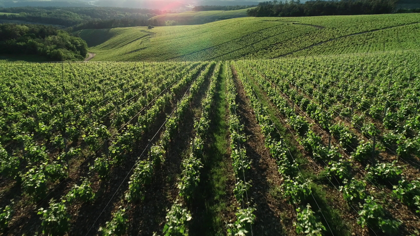 France, Champagne-Ardennes, Aerial view of Champagne vineyards, Aube department, Les Riceys, listed as World Heritage by UNESCO | Shutterstock HD Video #1030690313