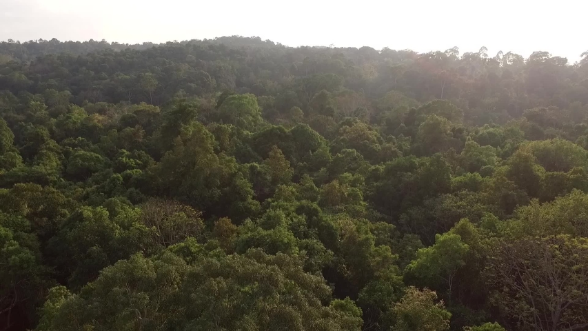 Drone shot , morning sunsine Forest area  at Khao Yai National Park , World Heritage , Thailand | Shutterstock HD Video #1030788983