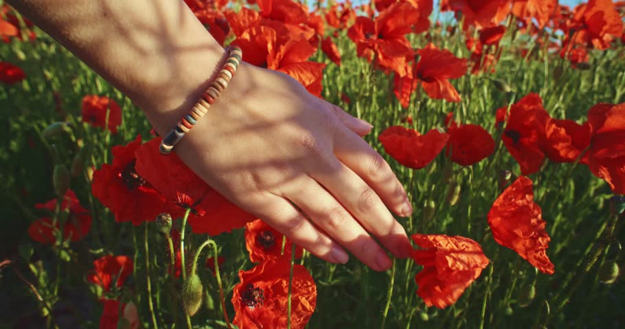 Close-up of woman's hand running through poppies field, crane shot. Slow motion 120 fps. Filmed in 4K DCi resolution. Girl's hand touching red poppy flowers closeup. Love nature concept.