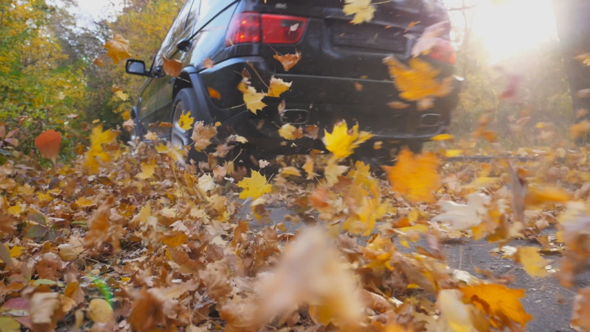 Leaves, Fall, Driving