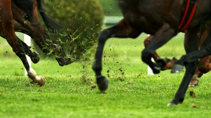 Super Slow Motion Shot of Running Horses at 1000fps.