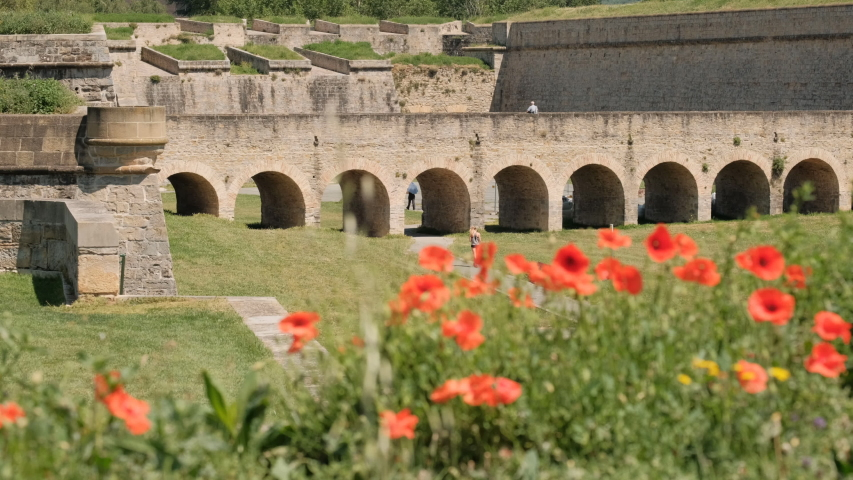 Poppy flowers in the Citadel of Pamplona, or The New Castle, in the city of Pamplona, Spain | Shutterstock HD Video #1032451673