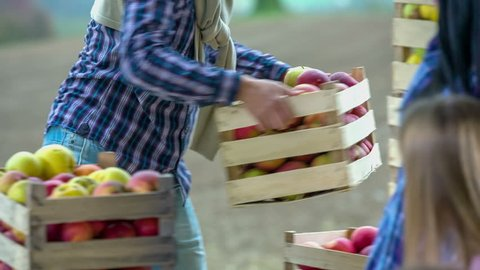 Young man picks the basket full of apples and brings to the table for family to take one etch, close up footage.