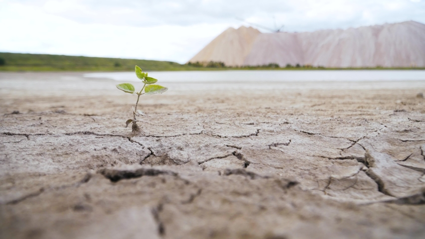 Growing plant on dry cracked ground. the effects of the greenhouse effect. destruction of vegetation due to heat. threat of destruction of vegetation of the Earth. | Shutterstock HD Video #1033209293