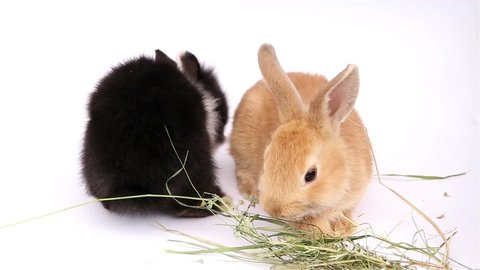 Easter bunny, cute bunnies, rabbit on white background