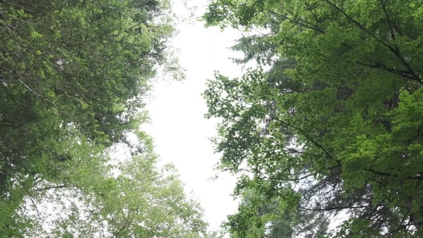 Slow motion, fronds of trees seen from below   Shutterstock HD Video #1033638533
