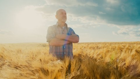 Portrait shot of the old handsome senior farmer in the plaid shirt holding hands grossed in front of him and turning face to the camera, smiling cheerfully in the middle of his wheat field mansion.
