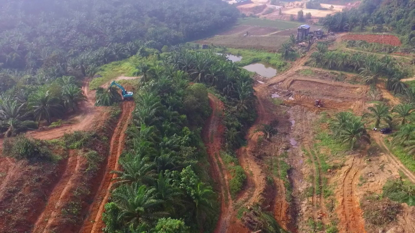 Aerial view of a Palm Oil Plantation with roads located in kluang, malaysia. | Shutterstock HD Video #1034579723