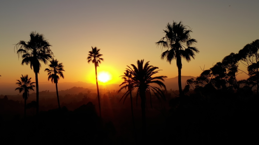 Aerial shot of a row of palm trees at Sunset | Shutterstock HD Video #1034689853