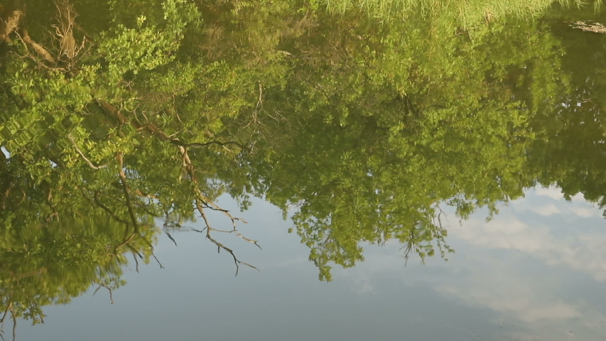Pond with sunny morning light.  trees reflected in a water. Early morning time. close-up | Shutterstock HD Video #1034769833