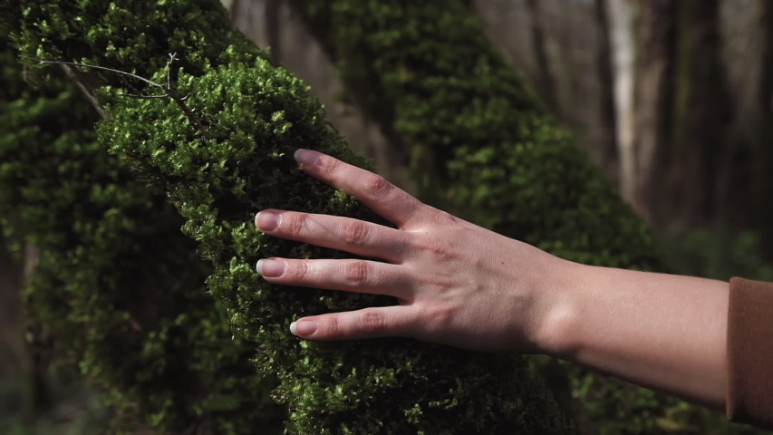 A female hand touches curly moss on a tree trunk in a close-up   Shutterstock HD Video #1034801663