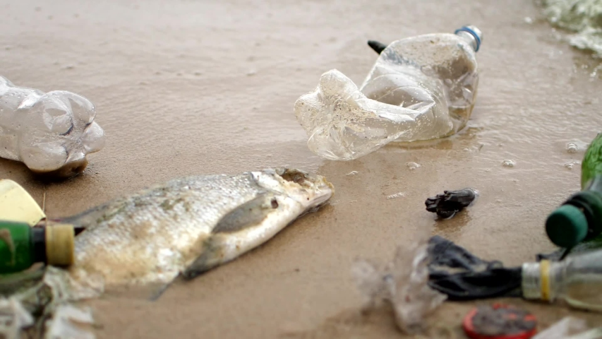 Dirty seashore with dead fish, waves collecting bottles and garbage, bad ecology