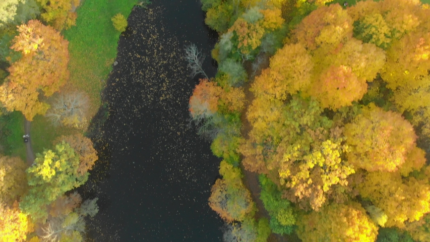 Aerial top down view of autumn forest with green and yellow trees | Shutterstock HD Video #1035942173