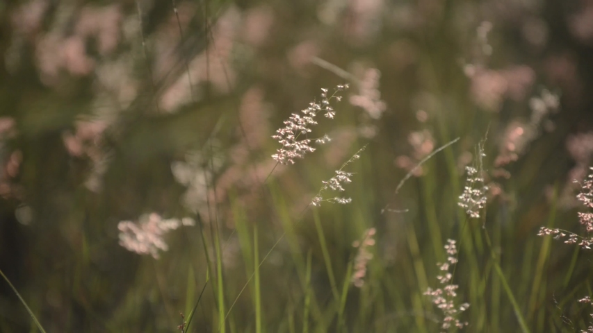 Meadow grass with sunset and gentle winds -intro title page | Shutterstock HD Video #1036671563