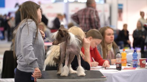 HELSINKI, FINLAND - APRIL 13, 2019: Pet owners and their dogs at a dog show during big fair Pet Friends in Messukeskus Expo Center. The event for everyone interested in small animals and pets