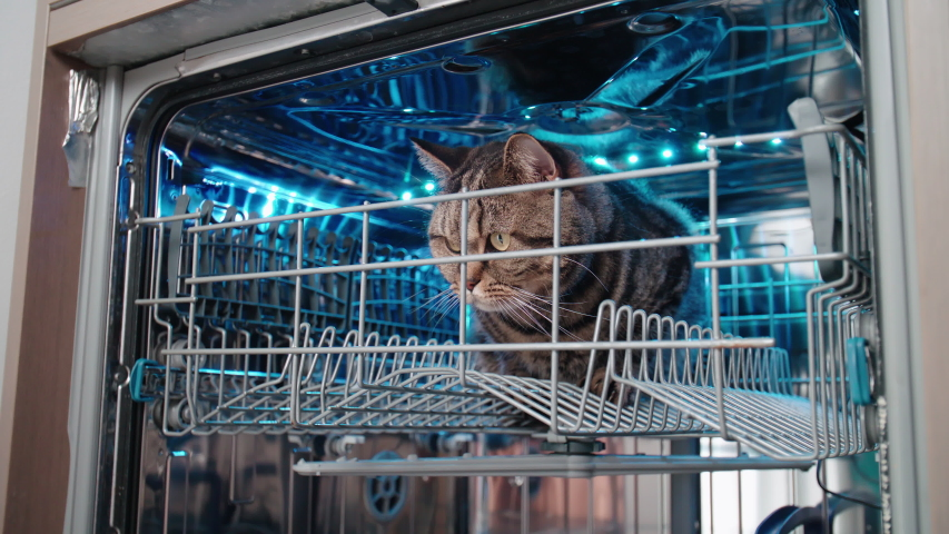 Cat in kitchen dishwasher 4K. Person point of view of the opened dishwasher with a cat in focus inside. | Shutterstock HD Video #1036954853