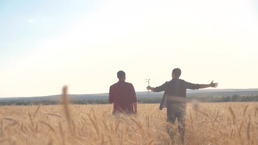 Teamwork smart farming slow motion video. two farmers work in wheat lifestyle field. farmers explore are studying. man with digital tablet Wheat Field summer in the field wheat bread. slow motion   Shutterstock HD Video #1037003393