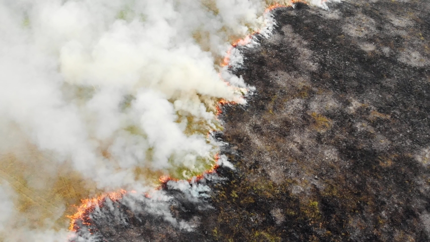 Epic aerial view of smoking wild fire. Large smoke clouds and fire spread. Forest and tropical jungle deforestation. Amazon and siberian wildfires. Dry grass burning in the field, drone footage