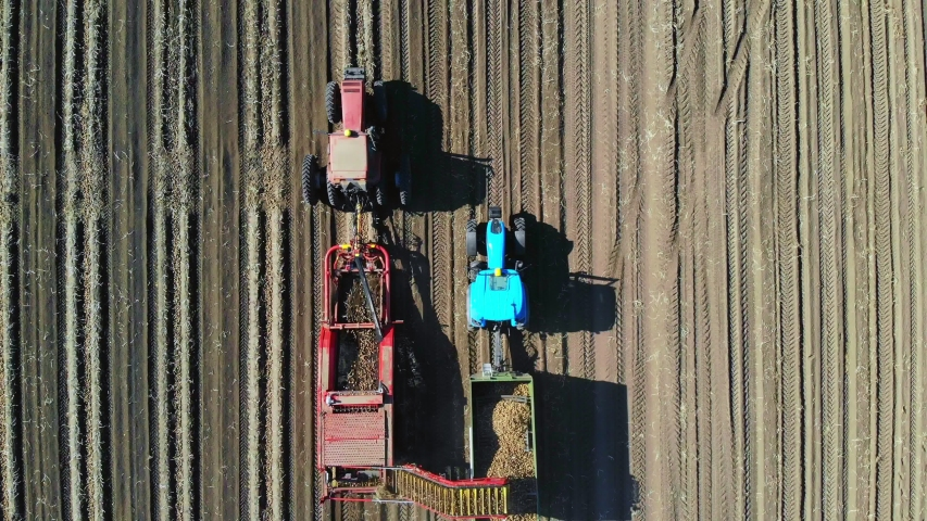 Top view, aero. Useing machinery at farm field during potatoe harvesting . Potatoe picking machine digs and picks potatoes, unloading crop into back of truck. warm autumn day | Shutterstock HD Video #1038773723