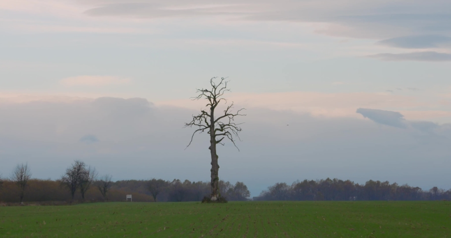 Single tree in the valley. Leafless strange tree in the middle of the field. Lifeless between alive concept. | Shutterstock HD Video #1040989313